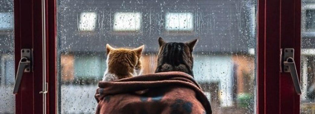 Всидіти вдома буде легше: синоптики обіцяють похолодання та сніг