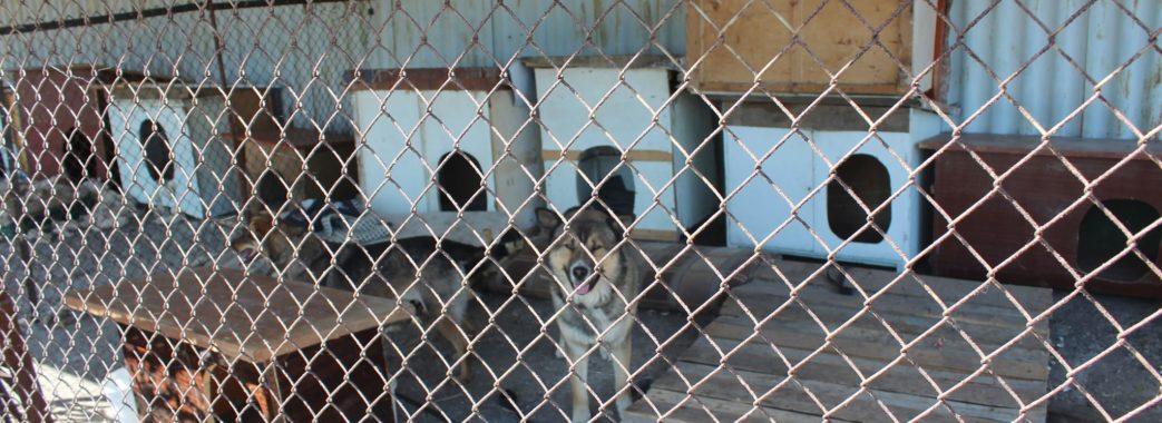 На Миколаївщині шукають місце для собачого притулку
