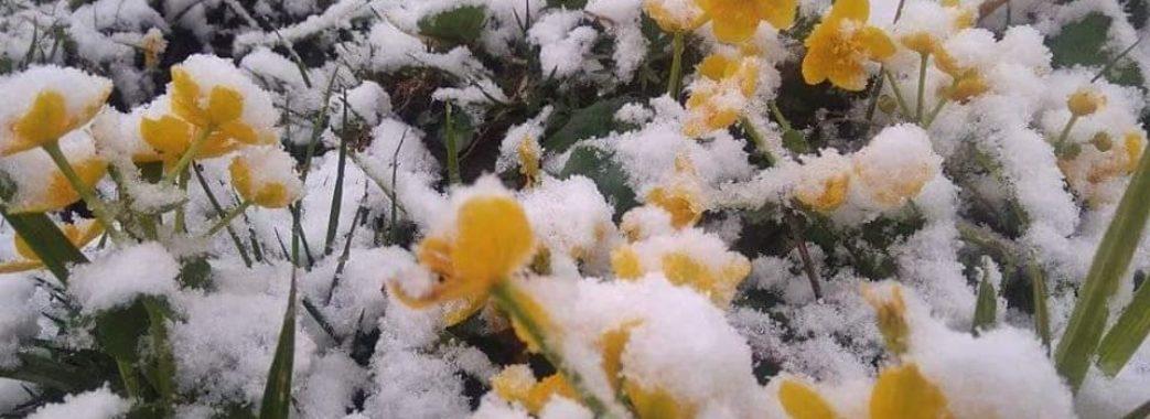 На Бойківщині випав сніг (Відео)