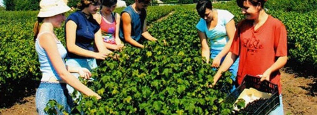 Польща послабить карантинні вимоги для сезонних робітників з України