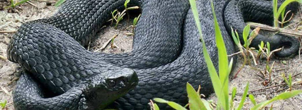 На Турківщині 9-річну дитину вкусила змія