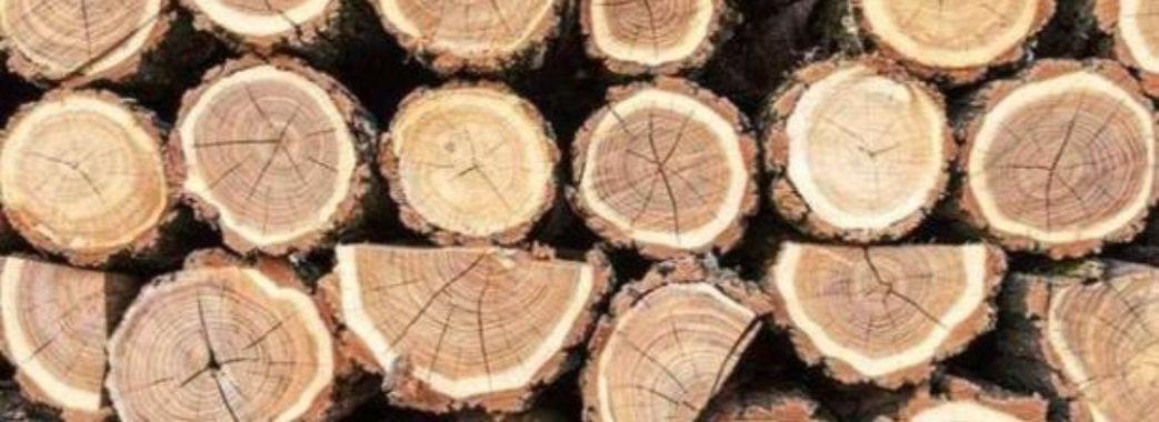 «Громади мають бути поінформовані про вирубки лісу»: підсумки наради в ЛОДА