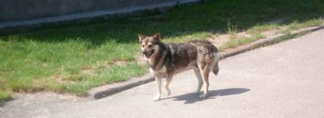 В Яворові чоловік з автомобіля стріляв у собак