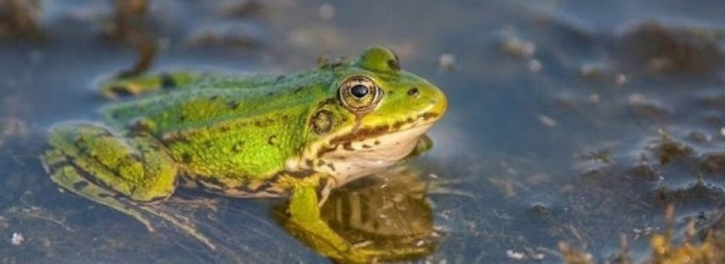 У Буському районі запрацювала жаб'яча ферма