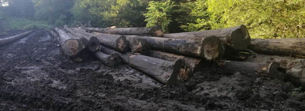Рубають ліс та руйнують дороги: на Старосамбірщині лісгоспи вперто ігнорують рішення місцевих рад