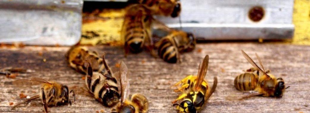 На Бущині після оприскування соняшникового поля загинули бджоли
