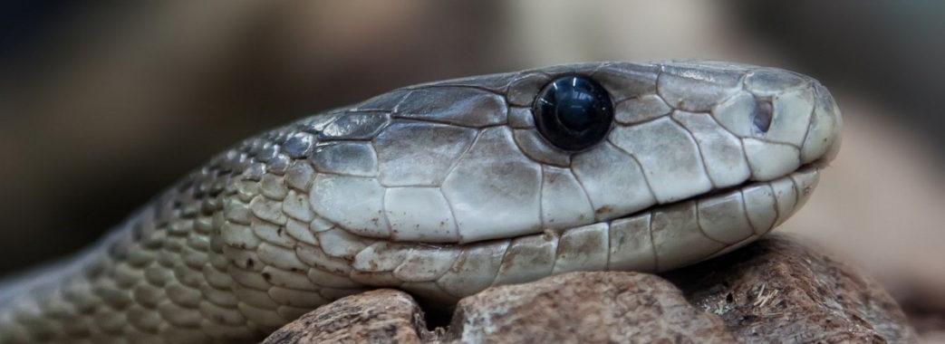 На Турківщині 6-річна дівчинка опинилась у реанімації через укус змії