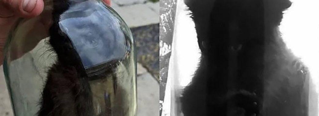 На юнака з Сокальщини, який закрив кошеня у банці, відкрили кримінальне провадження