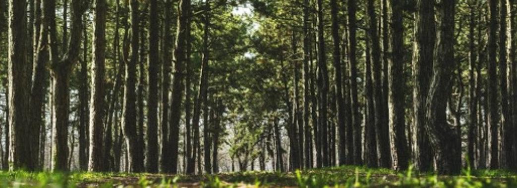 """""""Пішла до лісу по чорниці"""": на Жовківщині вже п'ятий день розшукують жінку"""