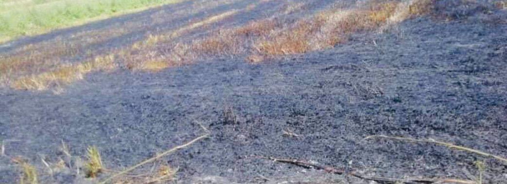 «Кинув недопалок»: на полях Жидачівщини вогонь знищив 800 квадратних метрів пшениці
