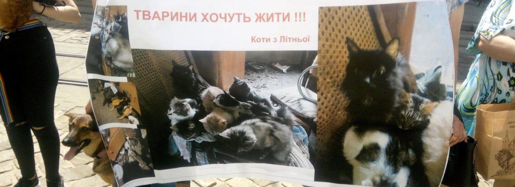 Зоозахисники знову вийдуть на акцію протесту з вимогою збудувати притулок для тварин у Львові