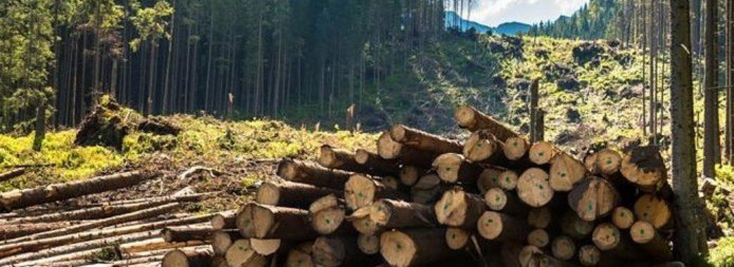 На Старосамбірщині викрили масштабну схему незаконної рубки лісу