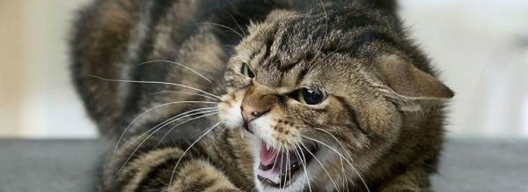 Хлопчик з Пустомитівщини опинився в реанімації через кота
