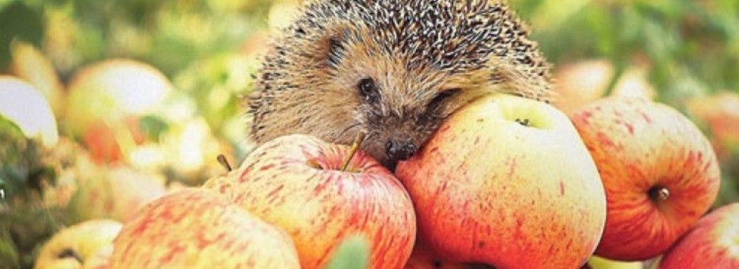 Ціни на яблука в Україні сягнули максимуму за три роки – експерти