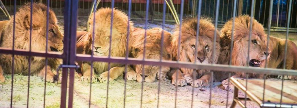 У Львові заборонили цирк з тваринами
