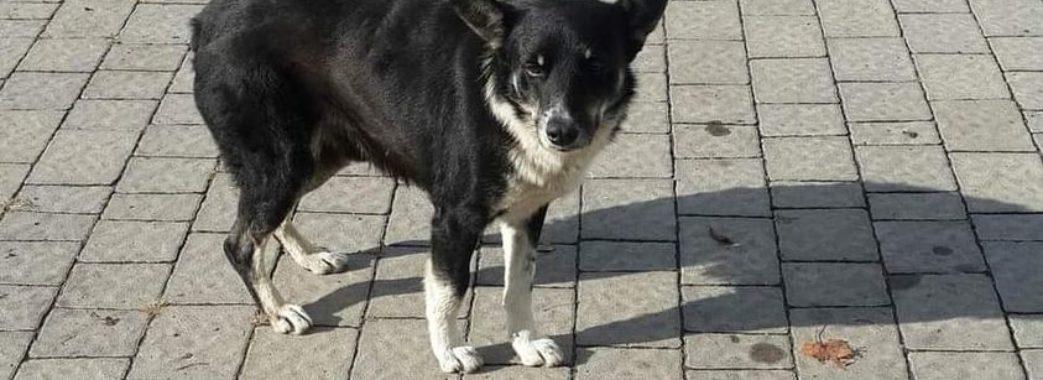 На Бущині безпритульний собака покусав школяра