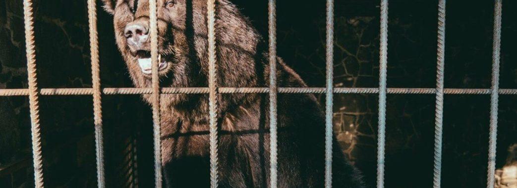 На Яворівщині у ведмежий притулок переселили двох врятованих ведмедів