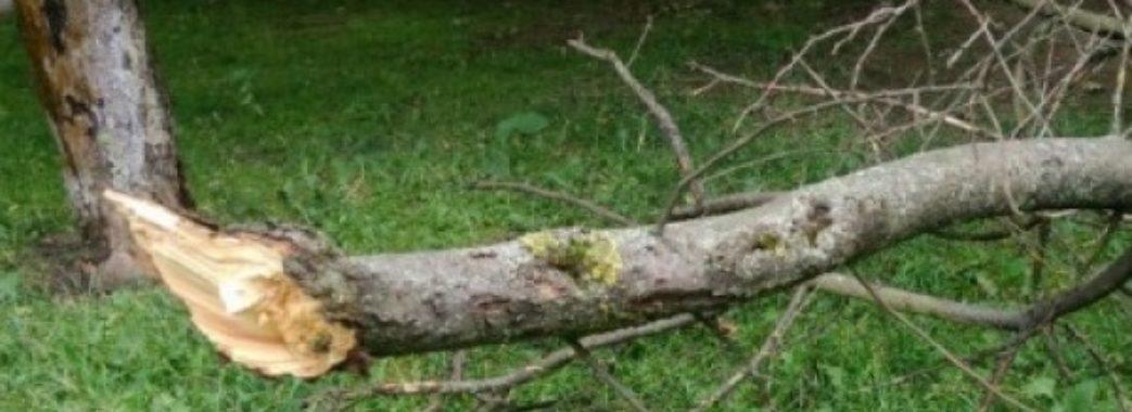 На двох працівників лікарні у Червонограді впало дерево: слюсар – в реанімації