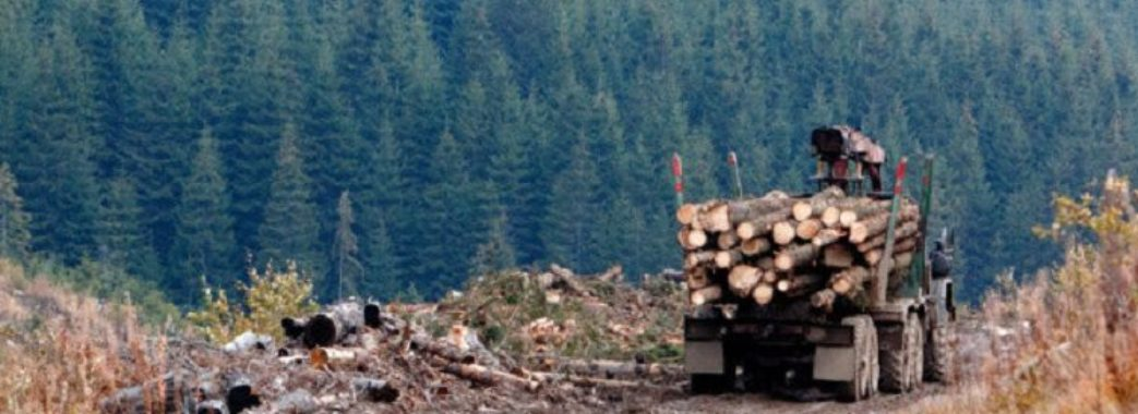 На Старосамбірщині за 6 днів вирубали дерева на мільйон гривень
