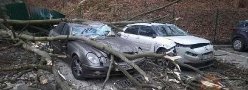 Повалені дерева та розбиті автомобілі: у Львові ліквідовують наслідки штормових вітрів