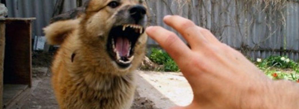 У Дрогобичі через скаженого собаку проводять вимушену вакцинацію тварин