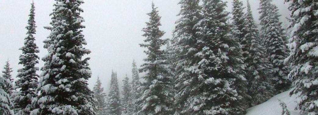 Сніг та ожеледиця: на Львівщині скоро похолоднішає