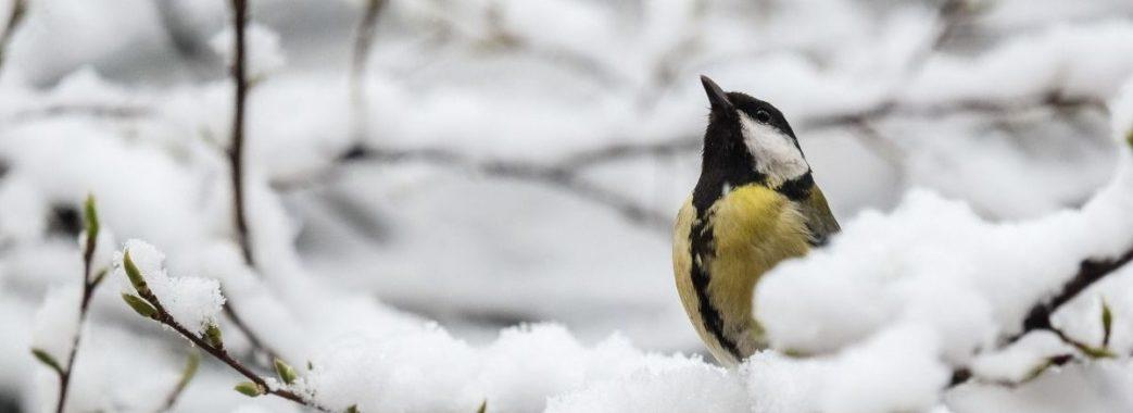 Снігопади та знову морози: погода випробовуватиме українців