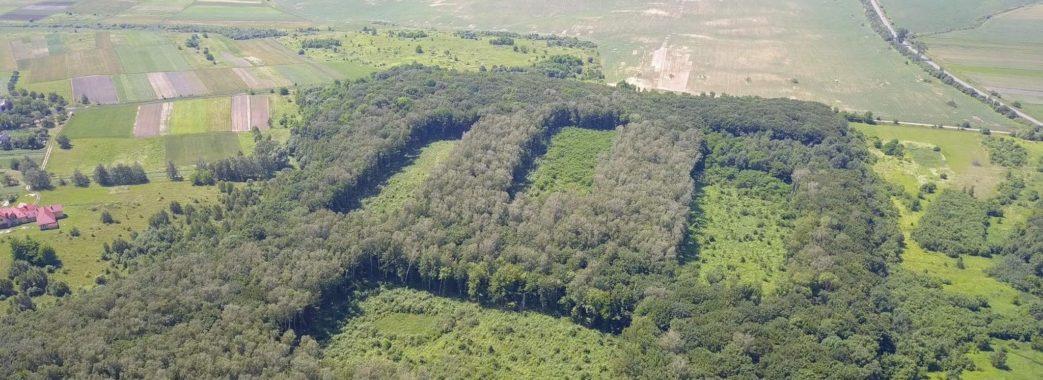 Вибирають найздоровіші дерева: на Жовківщині масово вирубують ліс (ФОТО)