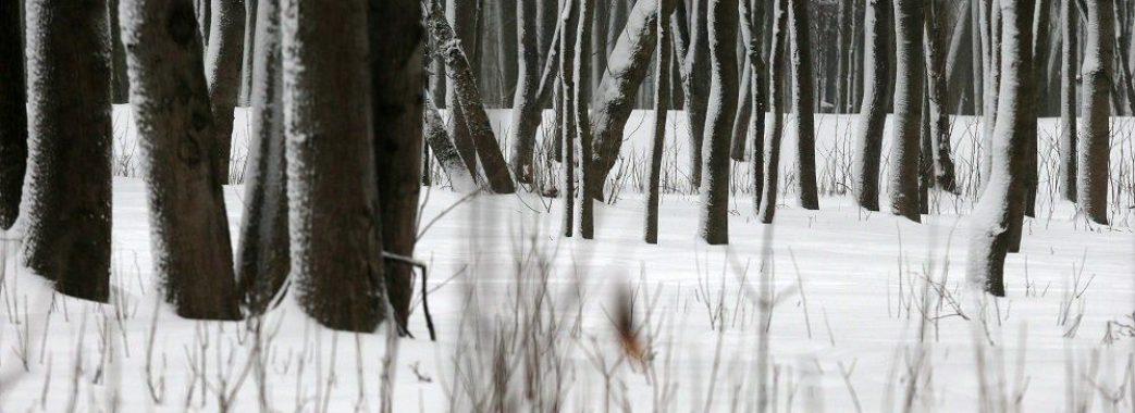 У лісі на Старосамбірщині знайшли тіло 59-річного чоловіка