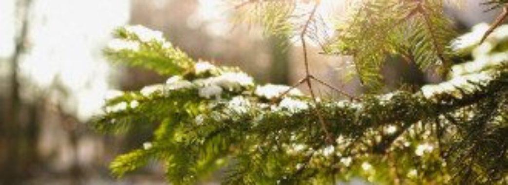 Приємний натяк на весну: синоптики обіцяють потепління