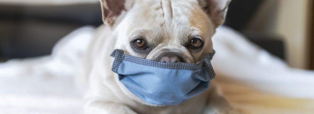 Собаки також хворіють коронавірусом та мають антитіла до хвороби – глава закордонної ветеринарної служби