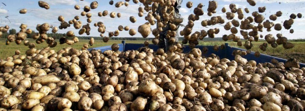 У Глинянах збудують потужний завод із переробки картоплі