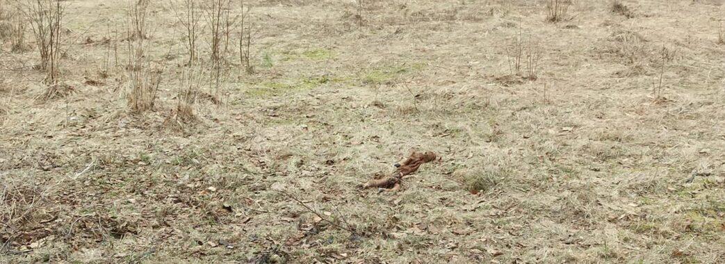 На Жовківщині поблизу джерела викинули рештки вбитої дикої тварини (ФОТО)