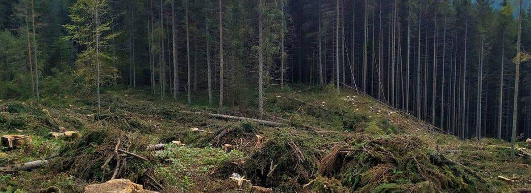 Ще одна громада на Львівщині проголосувала за контроль над лісовою господаркою