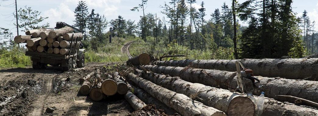Вже третя ОТГ на Самбірщині встановлює контроль над діяльністю лісгоспів