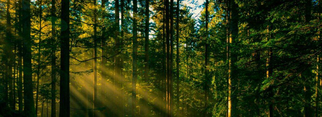 «Рубки знищують всю екосистему»: у Новому Калинові взялись за наведення ладу з лісовою господаркою