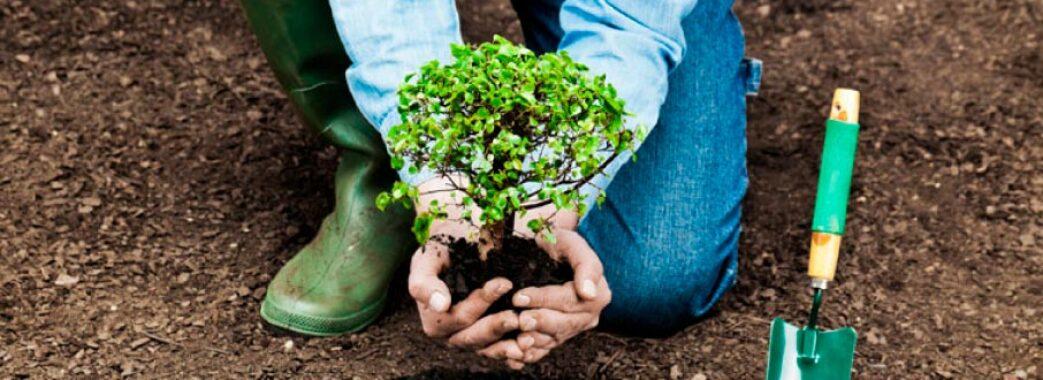 Мільйон дерев за 24 години: Львівщина долучиться до глобальної ініціативи