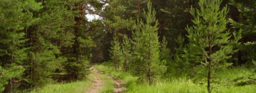 Комарнівська громада контролюватиме діяльність лісокористувачів