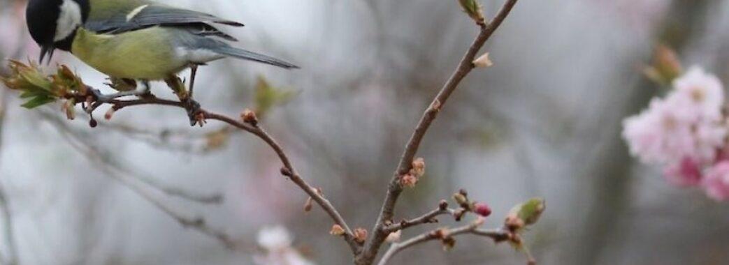Справжня весна у квітні та холодний Великдень у травні: прогноз погоди на найближчі дні та на весну
