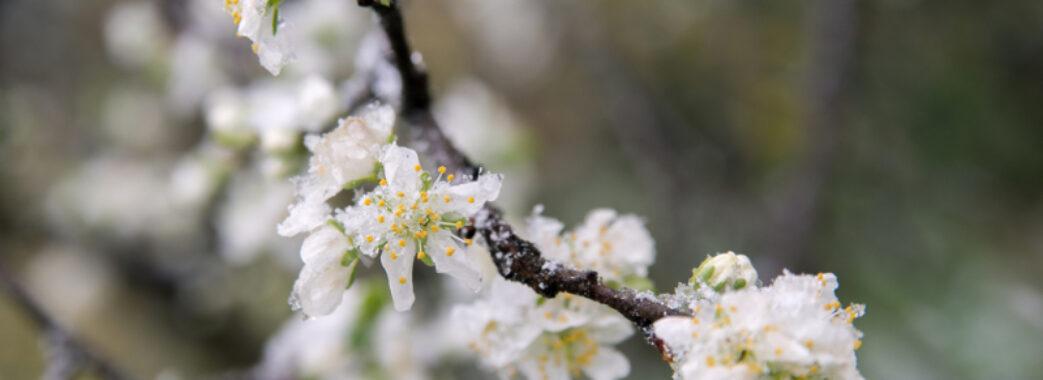 На Україну насуваються сильні заморозки