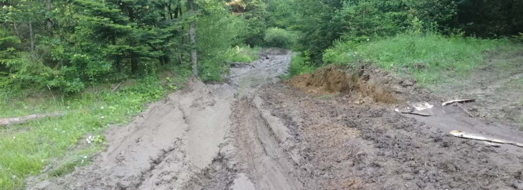 Підприємство Львівської облради знову допустило масові незаконні рубки деревини(ФОТО)