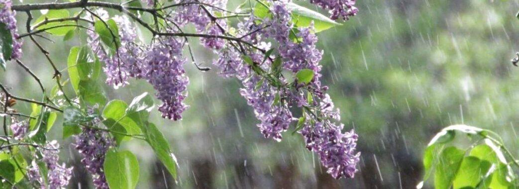 Дощі та зниження температури: синоптики дали прогноз на вихідні