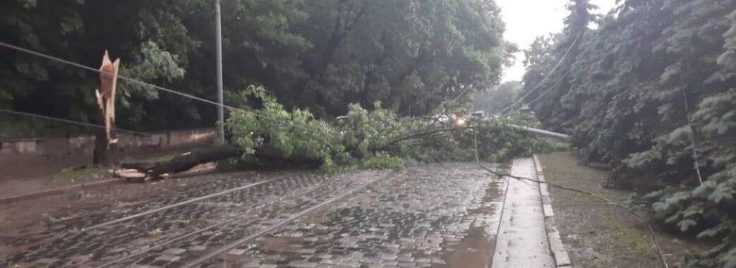 Повалено 206 дерев та пошкоджено 18 атомобілів: наслідки негоди