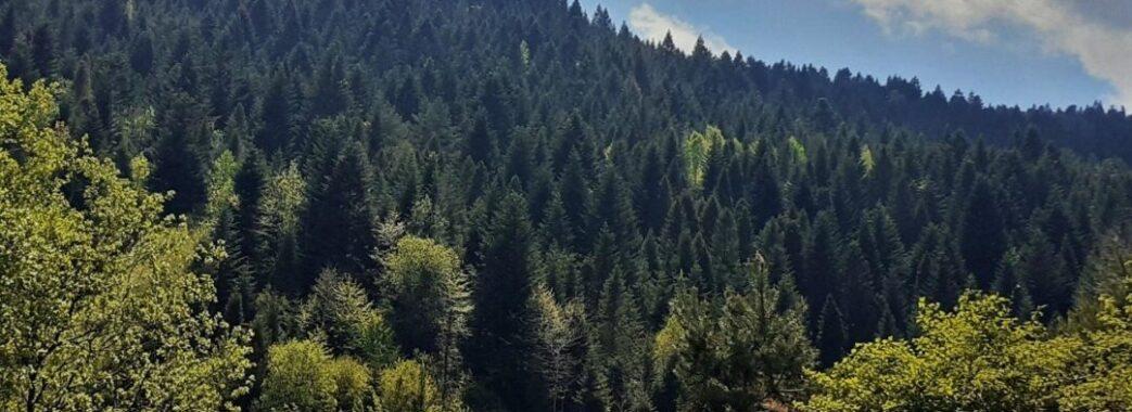 «Такі речі мають відбуватися прозоро»: депутати Стрілківської ОТГ не підтримали пакет лімітів на вирубки лісів