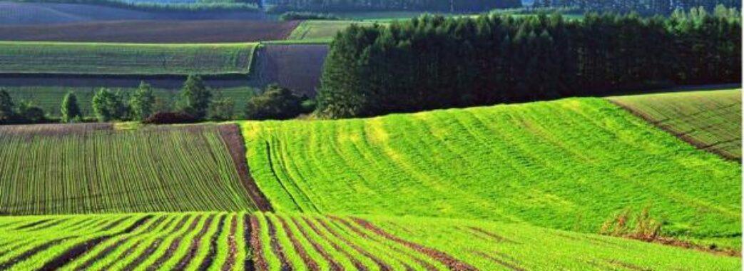 На Львівщині проведуть аукціон з продажу прав оренди землі: де і за скільки можна придбати