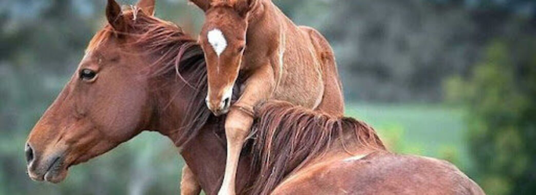 Готують до операції: на Золочівщині 5-річну дівчинку за щоку вкусила кобила