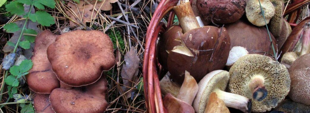На Турківщині 30-річний чоловік після частування грибами потрапив у реанімацію