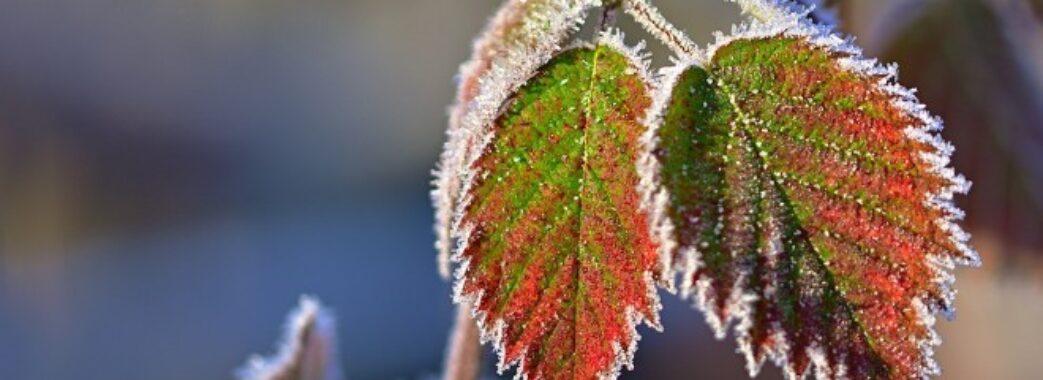 Синоптики застерігають про перші заморозки на Львівщині