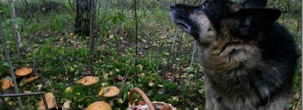 «Собака сидів біля покійного та гавкав»: на Самбірщині зниклого грибника знайшли мертвим