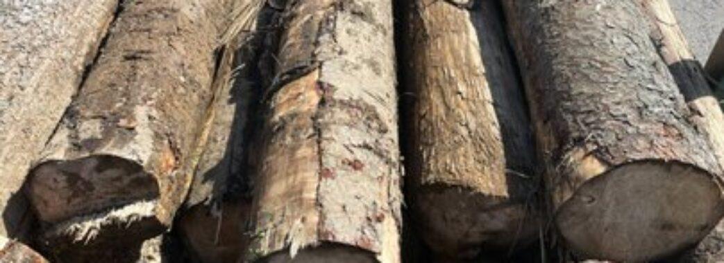 «Знайшли цапа-відбувайла»: працівника військового лісгоспу в Сколе затримали на хабарі